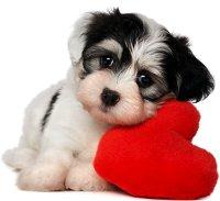 щенок с сердцем
