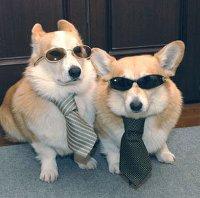 собаки в очках и галстуках