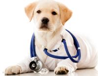 собака доктор