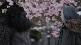 обезьяна и девочка