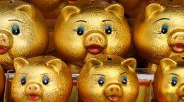 золотые свиньи