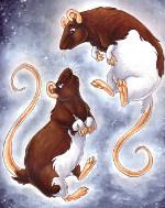 влюбленные крысы