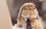 кролик в очках за компьютером