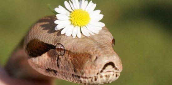 змея с ромашкой