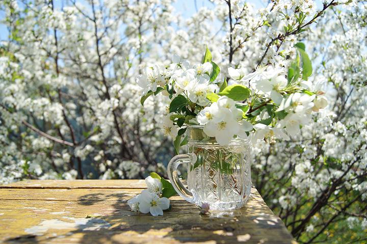 цветы вишни в стакане