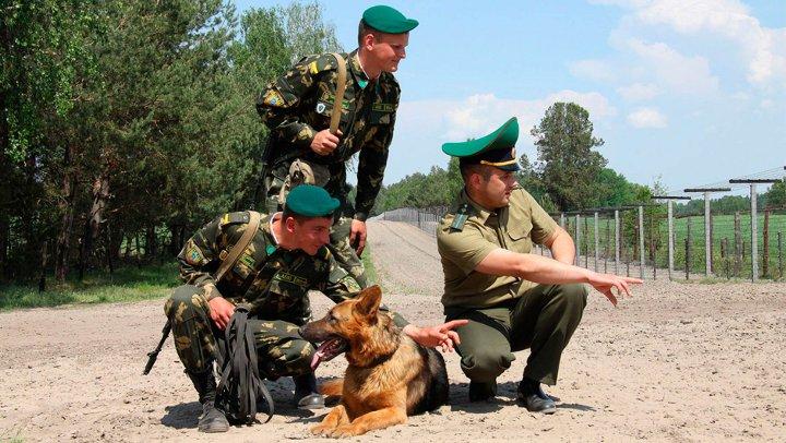 пограничники с собакой