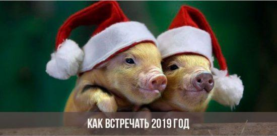 Две свинки в новогодних шапках