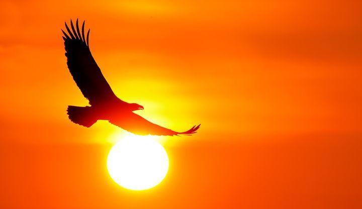 Орел парит в небе
