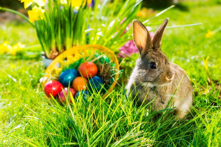 крашенные яйца и кролик
