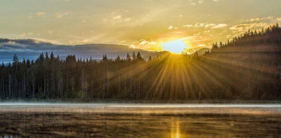 восход солнца в лесу