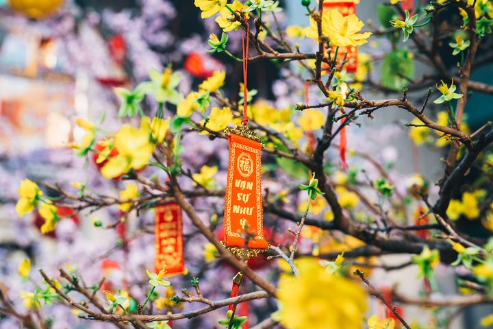 Новогоднее дерево во Вьетнаме