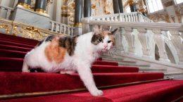 кот на лестнице Эрмитажа
