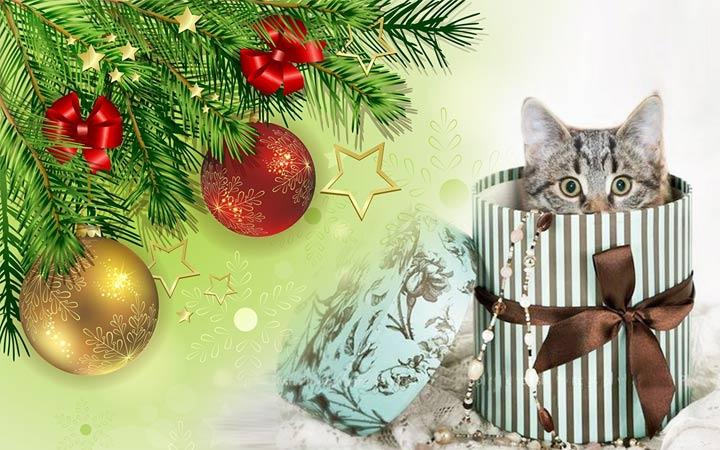 Котенок в подарок ребенку