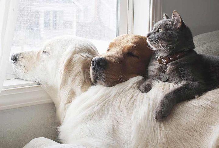 Домашние собаки и кот