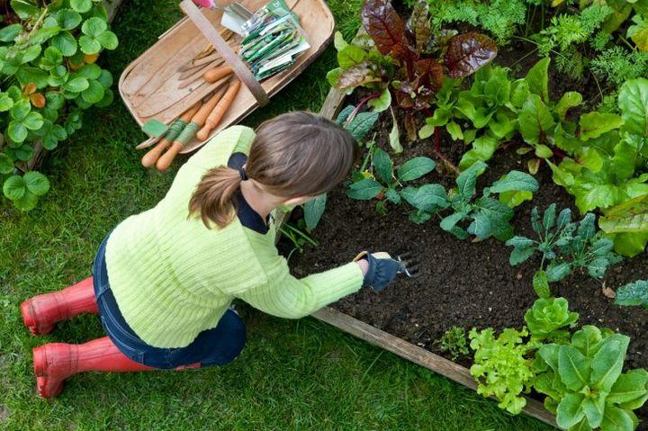 Работы на огороде