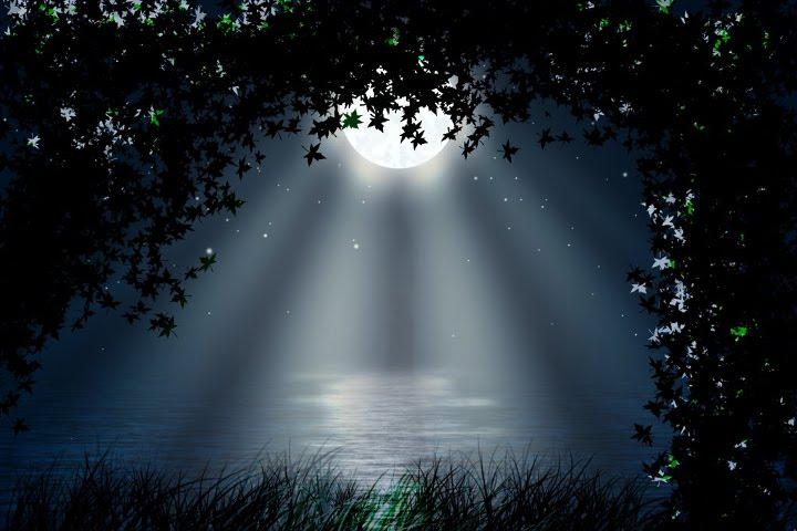 полная луна над водой среди листвы