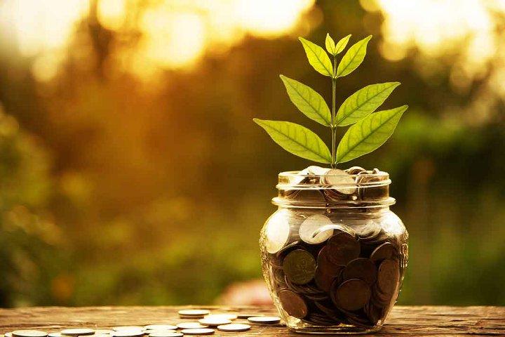 росток в банке с монетами