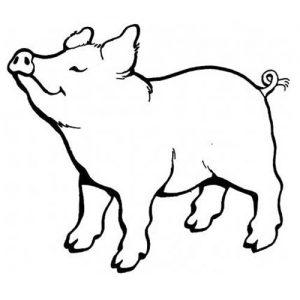Свинка раскраска