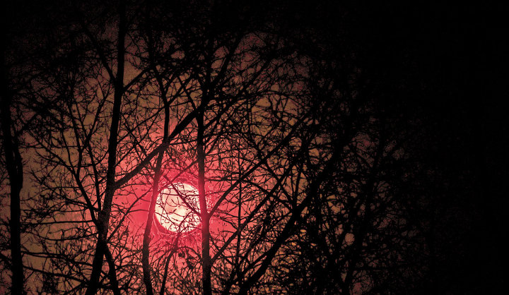 red moon through tree branches