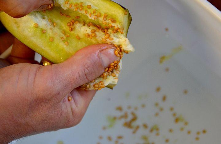 Сбор семян баклажан