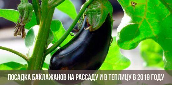 Баклажан