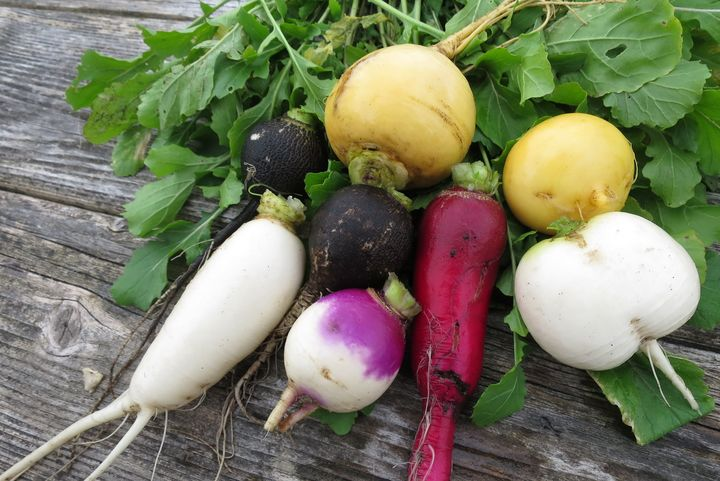 Harvest of radish and turnip