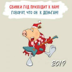 Смешная свинка на открытке