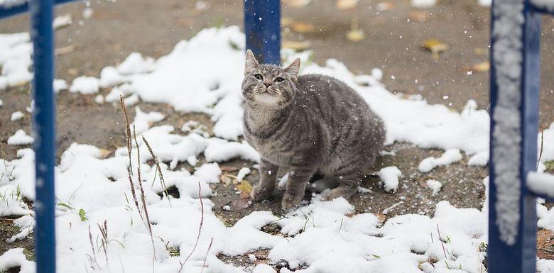 Зима в Краснодаре в 2018-2019 году