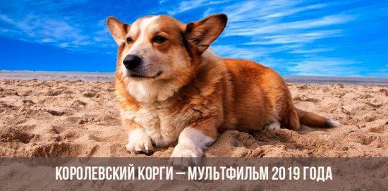 Собака корги