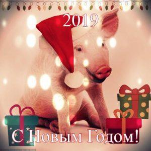 Пожелания и поздравления на 2019 год Свиньи