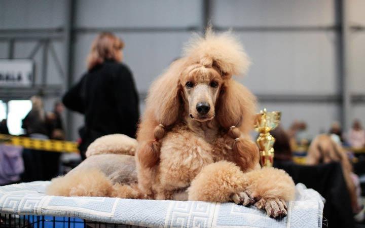World Dog Show 2019 когда и где пройдет выставка