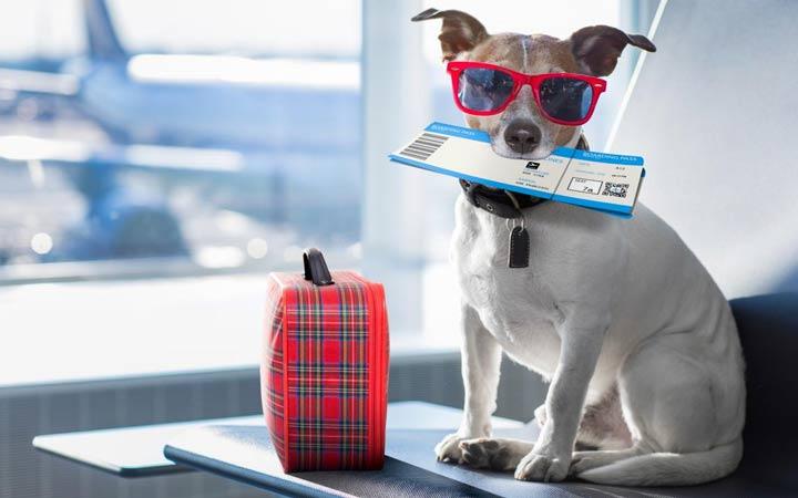 Как зарегистрировать собаку на World Dog Show 2019