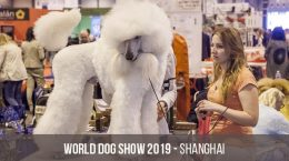 Чемпионат мира собак World Dog Show в 2019 году