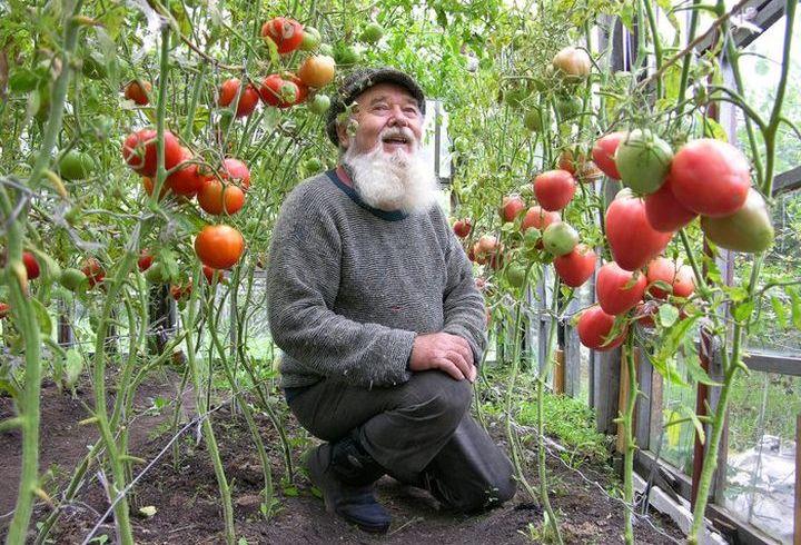 Пенсионер на даче