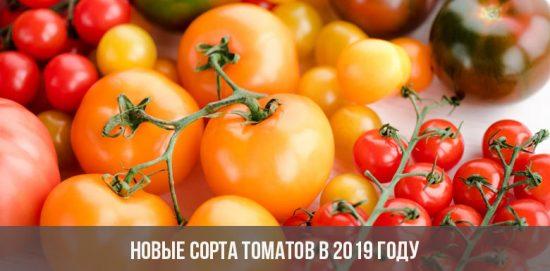 Новые сорта томатов в 2019 году