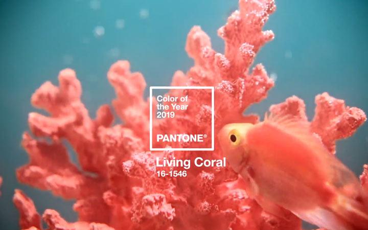 Живой коралл - цвет 2019 года