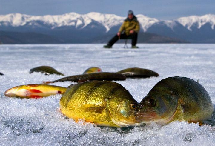 Улов на зимней рыбалке