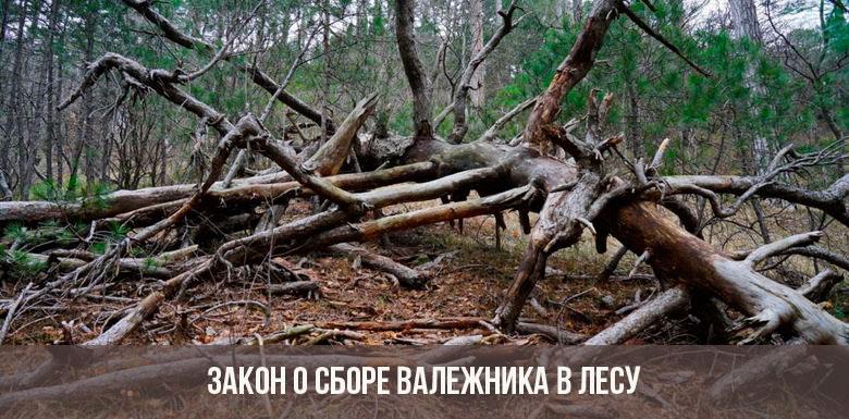 Закон о сборе валежника в лесу в 2019