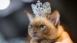 ВЫставки кошек в России в 2019 году