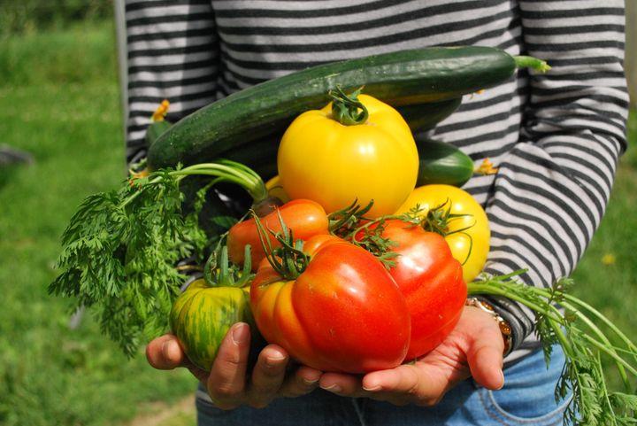 Урожай с огорода