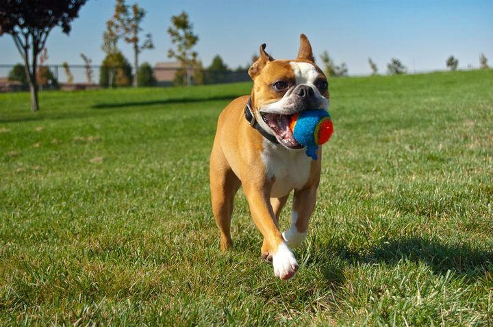 Собака с мячиком в зубах
