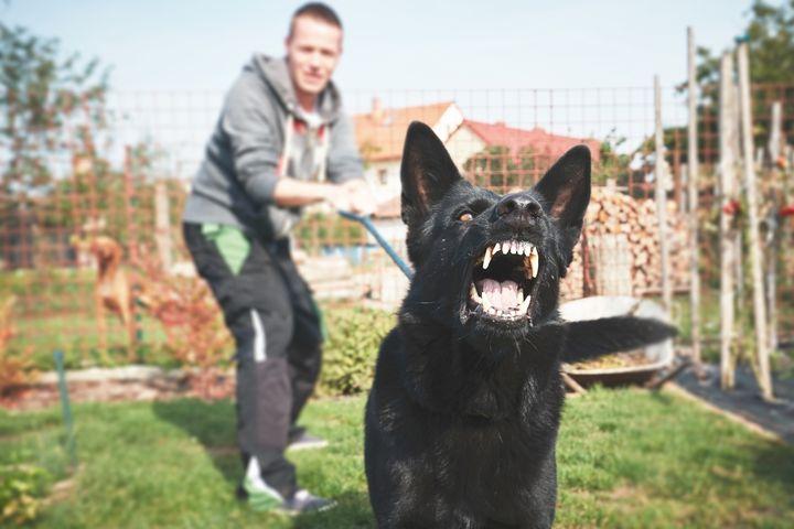Опасная собака лает
