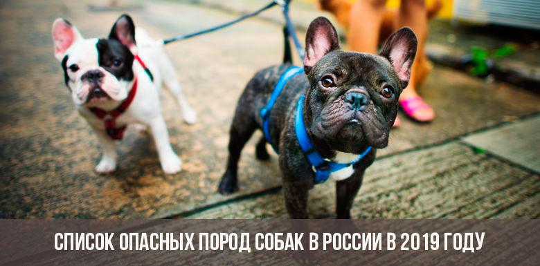 Список опасных пород собак в России в 2019 году