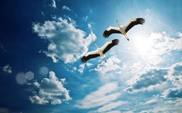 Приметы по птицам на Благовещение в 2022 году