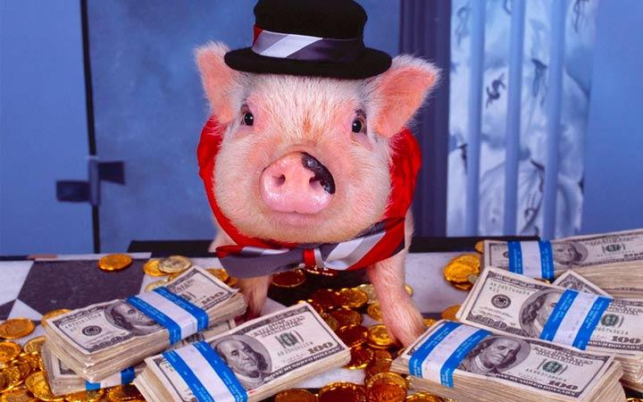 Финансы в год свиньи