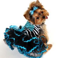 собака в платье