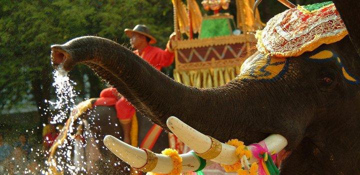 украшенный слон