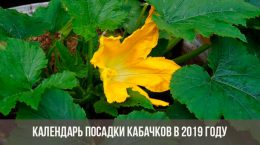 Новый закон о дачниках с 1 января 2019 - последние новости о СНТ новые фото